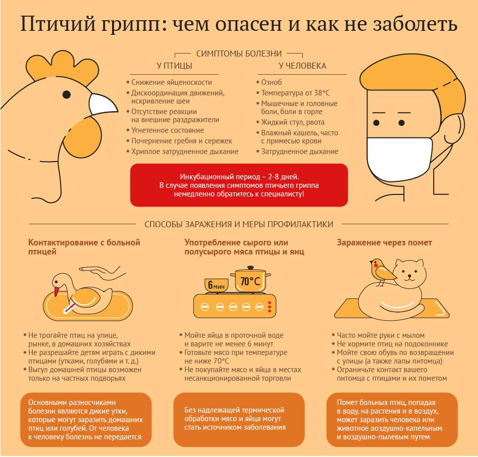 Птичий грипп: чем опасен и как не заболеть